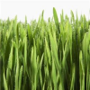 Thumbnail image for Kid Question: Why is Grass Green?
