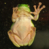 Thumbnail image for Kid Questions: Do Frogs Have Lips?