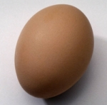 Post image for Anatomy of an Egg