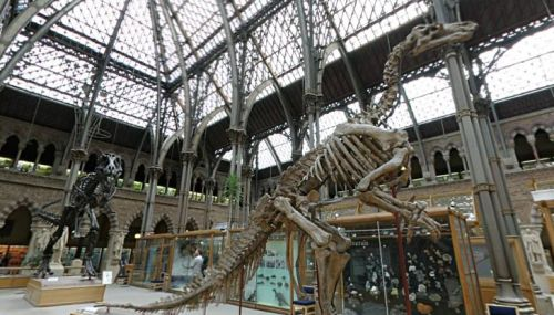 Dinosaur skeletons at the Oxford Museum of Natural History