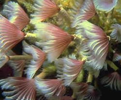 Tube worms