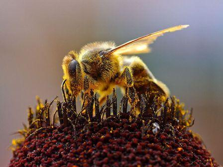 Bees and Pollen